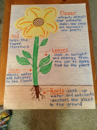 Parts Of A Plant Anchor Chart Science Anchor Charts First