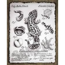 Leopard Gecko Morph Chart Leopard Gecko Morph Chart Print By Emily Burke Reptilesrus