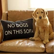 Image Bull Denim Best Upholstery Fabric For Pet Owners Kovi Pet Friendly Upholstery Fabrics