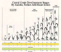 Wheat Growth Chart Growth And Development