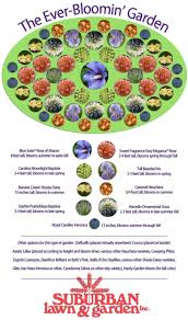Garden Plan Layouts Perennial Garden Design Plan For Kansas From Suburban Lawn Best