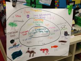 Ecosystems Chart Have Students Work On These In Groups