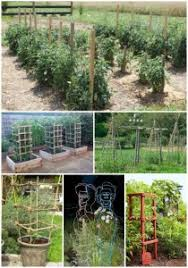 Diy tomato cage Gardens 18 Diy Tomato Cages For Your Garden Homestead Survival Make Tomato Cage Archives Homestead Survival