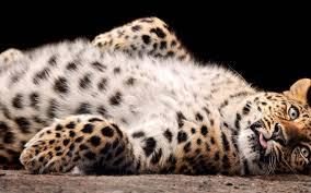 Rezultat iskanja slik za wildlife  exercises