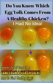 Egg Yolk Colour Chart Pin On Natural Health