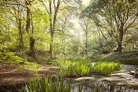 Hampstead Heath - Sandy Heath and midnight iris — DANIEL PECENA