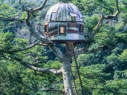 Tricked Out Treehouses