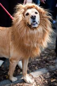 These Dog Halloween Costume Ideas Are Already Getting Us Excited