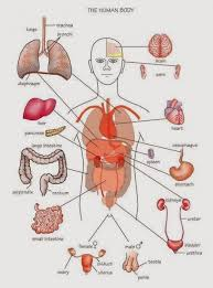 Welcome to innerbody.com, a free educational resource for learning about human anatomy and physiology. Pin On Nice Post