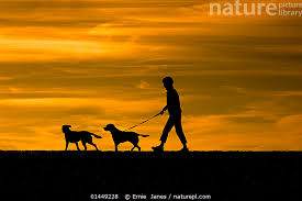 Image result for man walking two dogs silhouette