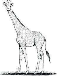 Giraffe Printable Template Giraffe Template Printable Barca Fontanacountryinn Com