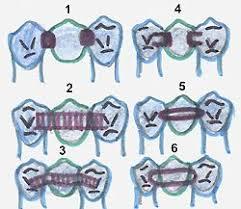 Современные методы лечения дефектов зубных рядов адгезивные  Рис 1