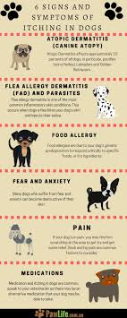 6 Signs and Symptoms of Itching in Dogs | Labrador Dog Health ...