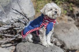 Free Knitted Dog Sweater Patterns Simple Stitch Mountain Team USA Dog Sweater Free Knitting Pattern At