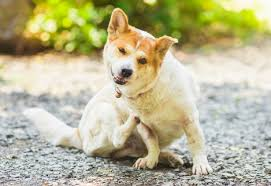 Natural Supplements for Dogs With Itchy Skin | petMD