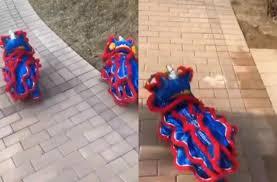Atraksi barongsai terbaru menyambut imlek gong xi fat cai 2020 ada barongsai lucu warna ungu di mall artha gading. Super Gemas Dua Anjing Ini Pakai Kostum Barongsai Jelang Imlek Hitekno Com