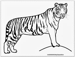 Small Picture Inspiring Tiger Pictures To Print 85 6720