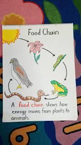 Chain Grade Chart First Grade Food Chain Anchor Chart Done Food Chain