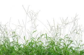 Identifying Pastures Part 2 Bighead Grasses Feedxl Horse