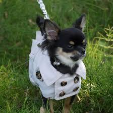 dogfashion trenchcoat lovely dots size 24