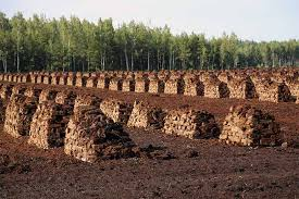 learn about peat moss and whether you should use in gardenerspath com