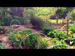 1 acre garden huge production you