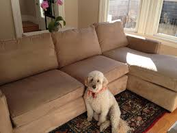 keep the couch you and your dog love