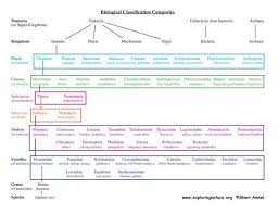 Classification Of Living Things Chart Classification How
