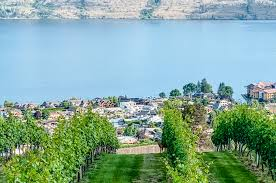 West kelowna travel forum west kelowna photos west kelowna map west kelowna guide. West Kelowna Wineries And Which Are Worth Visiting By A Local Twt