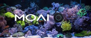 Robosnail™ danireef portale dedicato allacquario marino e dolce