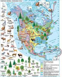 Климат Северной Америки География Реферат доклад сообщение  Рис Природные зоны Северной Америки