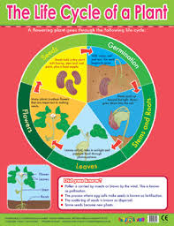 Learning Chart Plant Lifecycle Learning Chart School Poster