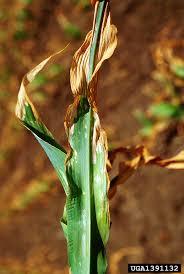 What Is Fertilizer Burn How To Treat Fertilizer Burn