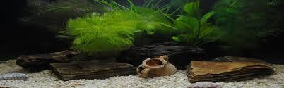 Omalleys The Aquarium Specialist Tropical Fish Cold
