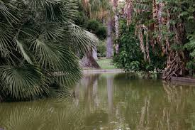 the tropical botanical garden of lisbon a green pearl in belem