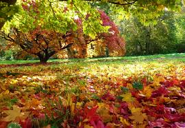autumn view gardens. Plain Gardens 2018  Where To See Around 100 Of The Best Places For Autumn Tints Leaves  And Colours At Gardens In British Isles Near Me UK  On Autumn View Gardens R