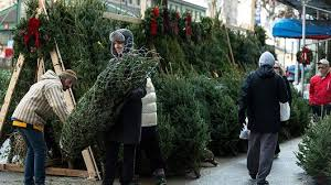 What Type Of Christmas Tree Should You Buy  Christmas Decor When Should You Buy A Christmas Tree