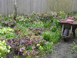 perennials plants shade gardening 143214046