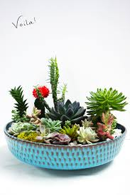 Small Picture How to make a Succulent Garden DIY QuinnCooperStylecom