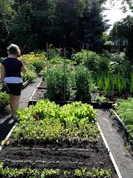 living the gardening life favourite feature is the vegetable garden strathcona county garden tour