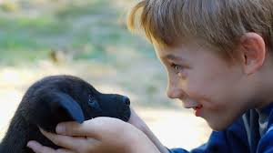 Image result for boy looking at puppy