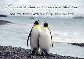 My biggest regret is being naive enough in thinking that list of top 8 famous quotes and sayings about cute love penguin to read and share with friends on. Penguin Love Quotes Quotesgram Penguin Love Quotes Penguin Quotes Penguin Love