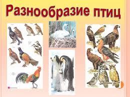 Разнообразие класса Птицы  Многообразие класса птицы