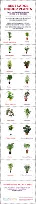 find out best large indoor plants for your home or office tall houseplants look fascinating
