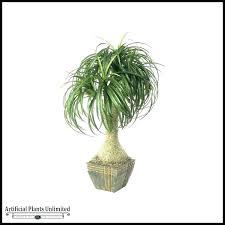 best tall indoor plants best indoor house plants best large indoor plants uk