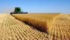 ارتفاع صابة الحبوب مليون قنطار خلال 2014 images?q=tbn:ANd9GcS