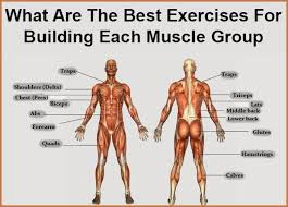 how to build muscle for each muscle group