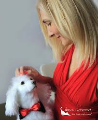 dog realistic poodle adoption