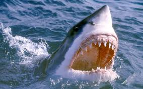 great white shark attack. Fine Attack South African Tour Guide Tells How He Survived Great White Shark Attack  After Jumped Over The Side Of Boat To Try Out New Spearfishing Equipment Throughout Great White Shark Attack E