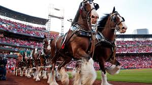 budweiser clydesdales mercial honors